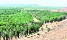 10lakhs plants planted in singareni