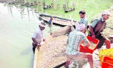 prawns rates hike in districk